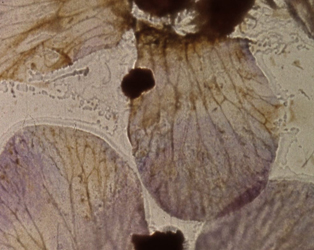 STAN BRAKHAGE: A CELEBRATION